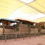 MERCATO DECUMANO EXPO - DANTE FERETTI 07