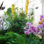 Piane e fiori