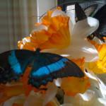 Primo piano farfalla